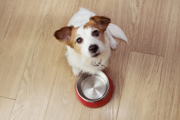Poster Chien Hungry dog food with a red empty bowl. High angle view.