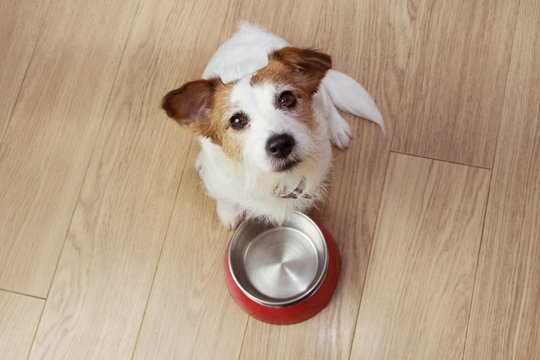 Hungry dog food with a red empty bowl. High angle view.