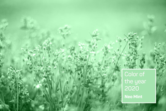 Closeup of wild meadow with green grass and small buds. Trendy neo mint toned nature background. Year color concept.