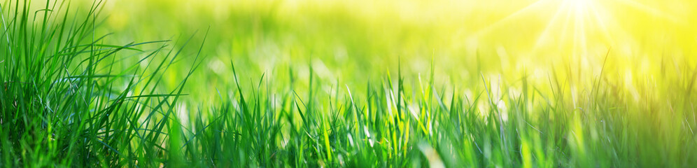 Wall Mural - Fresh green grass background with sunlight