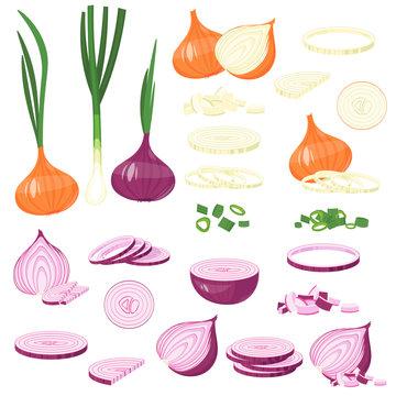 fresh cut onion, green, Red Onion, leek. cartoon illustration Isolated on white Vector