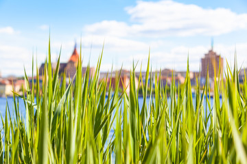 View Between Grass Blades to Town / Riverside grass at view across river toward background with old houses, hanseatic city of Rostock, Mecklenburg, Germany (copy space)