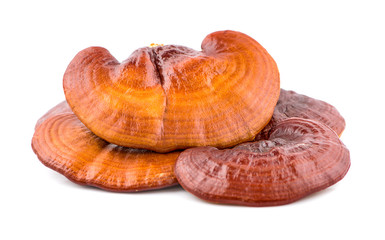 Dried Ganoderma Lucidum Mushroom isolated on white background.Ling Zhi Mushroom