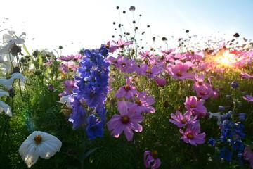 Fototapete - Sommer Blumen Wiese - Grußkarte Blumenwiese