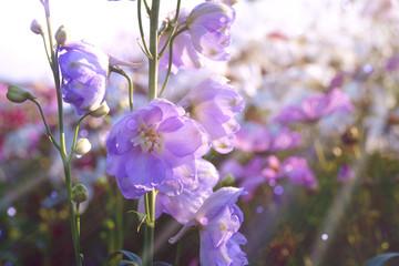 Wall Mural - Sommer Blume  Wiese - Blumenwiese mit Rittersporn und Cosmea