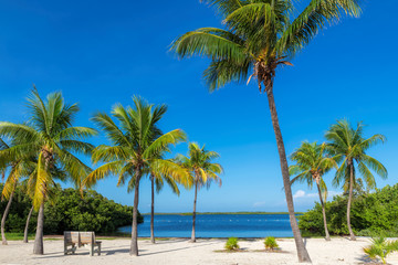 Fototapete - Coco palms on Sunny beach and Caribbean sea in Key, Largo, Florida.