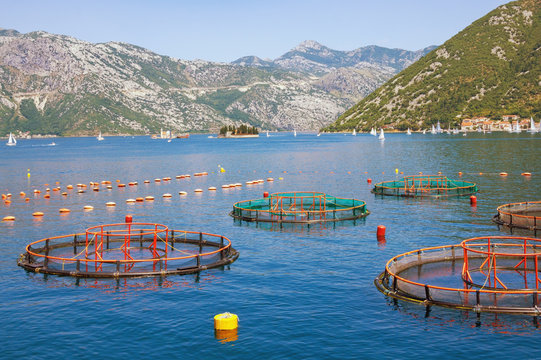 Fish farm. Beautiful Mediterranean landscape. Montenegro, Adriatic Sea, Bay of Kotor. Perast town and two small islands in the distance