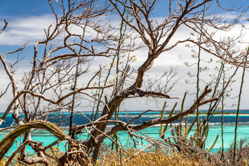 Saint Vincent and the Grenadines, Tobago Cays beach