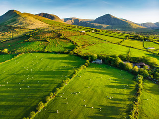 Fotobehang Pistache Aerial view of endless lush pastures and farmlands of Ireland. Beautiful Irish countryside with green fields and meadows. Rural landscape on sunset.