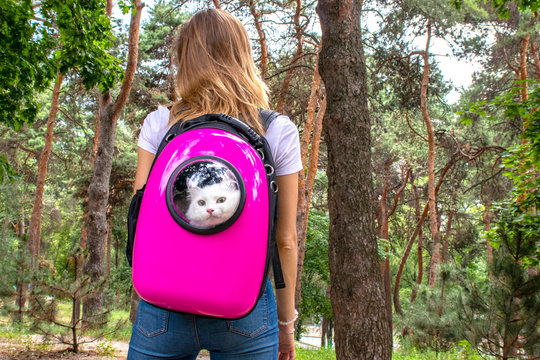 Backpack with a porthole for a walk with pets. The kitten looks out the window of the pink backpack. Backpack for carrying animals. Pet Friendly Concept