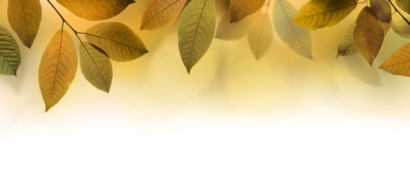 Autumn leaves border background or banner