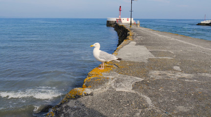 Looking out to sea along the edge of the Banjo pier, Looe with a freindly seagull watching. On a warm sunny day