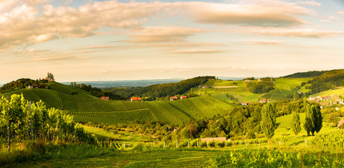 Grape hills and mountains view from wine street in Styria, Austria ( Sulztal Weinstrasse ) in summer. Fototapete