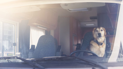 Faithful Dog sitting on driver seat in camping trailer waiting for owner, travel