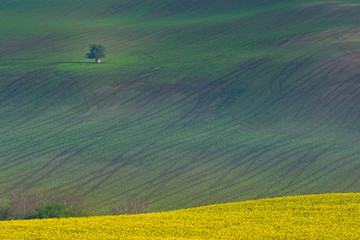 Spoed Foto op Canvas Khaki Beautiful and colorful abstract landscape, with rolling hills, green wheat fields and yellow rape fields in South Moravia, Czech Republic