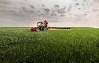 Fotomurales - Tractor spraying wheat field