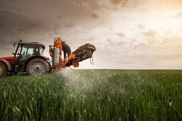 Wall Mural - Tractor spraying wheat field