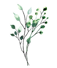 Fototapeta Watercolor branch with green leaves. Hand painting floral illustration. Leaf, plant isolated on white background.  obraz