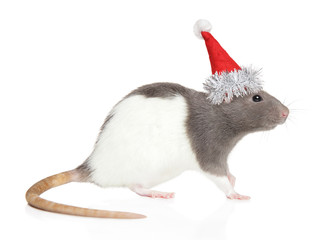 Decorative rat in Santa Red hat
