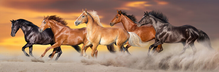 Spoed Foto op Canvas Paarden Horse herd run gallop in desert dust against dramatic sky