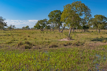 Wetland and the Savannah in the Pantanal
