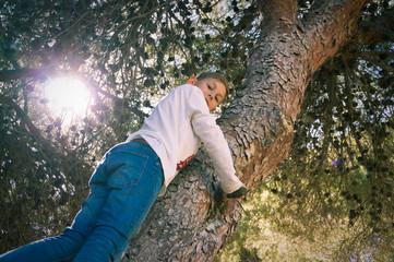 Young boy climbing on pine tree sunny day