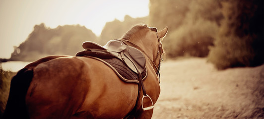 Saddle with stirrups on a back of a horse.