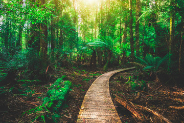 Beautiful path in lush tropical rainforest jungle in Tasman peninsula, Tasmania, Australia. The...