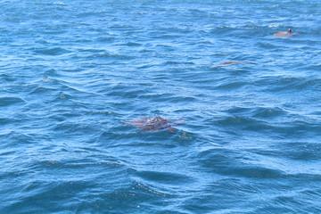 waves on water turtle Wall mural