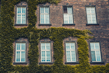 Vintage windows on a brick house covered with greenery