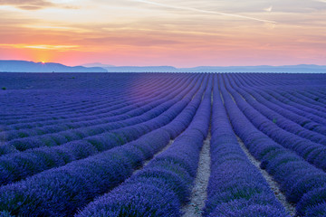 Valensole Plateau, endless Lavender field at sunset. France