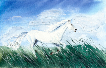 Watercolor picture of a white running horse in tall green grass