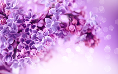Fotoväggar - Lilac flowers bunch violet art design background. Beautiful violet Lilac flowers closeup. Watercolor nature floral backdrop