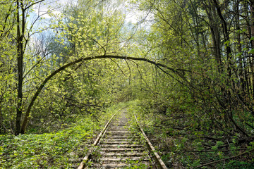 Abandoned railway with trees fallen down on rusty rails