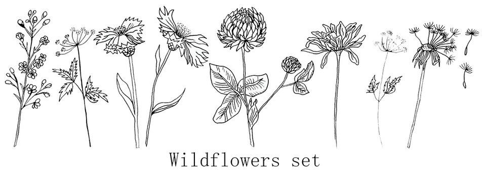 Hand drawn ink wildflowers set, calendula, clover, dandelion