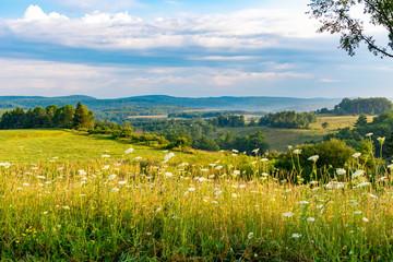 Flowers on roling hills in western PA