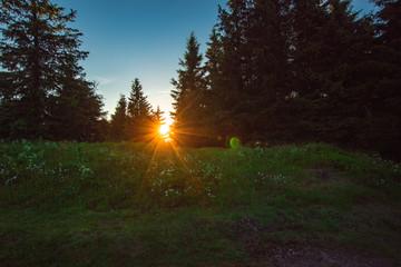 Sommer im Thüringer Wald