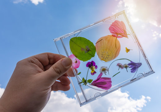 Colourful pressed summer flower petals in CD case
