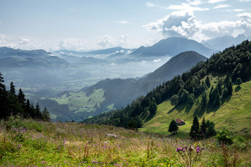 Beautiful Bavarian landscape, green meadows, flowers, mountains and foggy valley at summer day