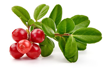 Lingonberry with leaves, isolated on white background
