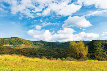 Photo sur Plexiglas Bleu tree in yellow foliage on the meadow. beautiful countryside landscape on a sunny day with fluffy clouds on the sky. carpathian rural area in autumn