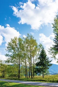beautiful countryside in mountain. aspen trees along the road. wonderful september weather in afternoon