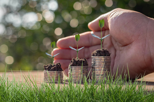 Caring for small green trees in hand