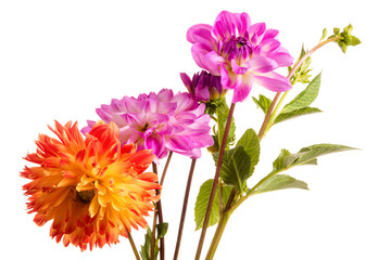 Cadres-photo bureau Dahlia Orange and pink dahlia flowers isolated on a white background
