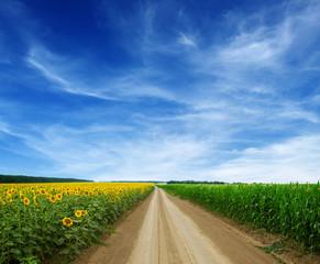 Fototapete - road in green field