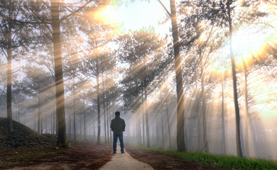 Silhouette of man in the pine forest in the morning sun rays through trees. Beautiful forest with natural light from the sun and fog