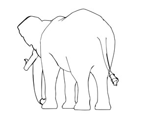 sketch of animal elephant isolated vector