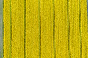 pola uprawne z lotu ptaka, żółty zielony młody rzepak, zborze