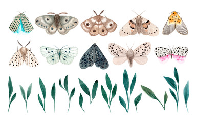 Watercolor night moth isolated on white background. Moths vintage illustration. Night butterfly.