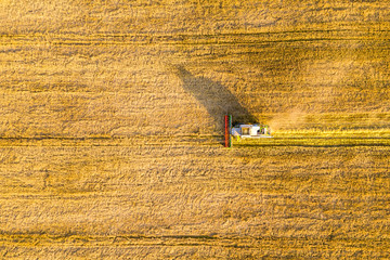 Combine harvester in wheat field. Bird eye view
